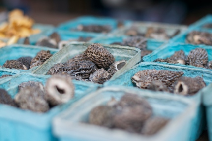 Black Morel mushrooms from The Mushroom Stand